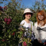apple_picking-03